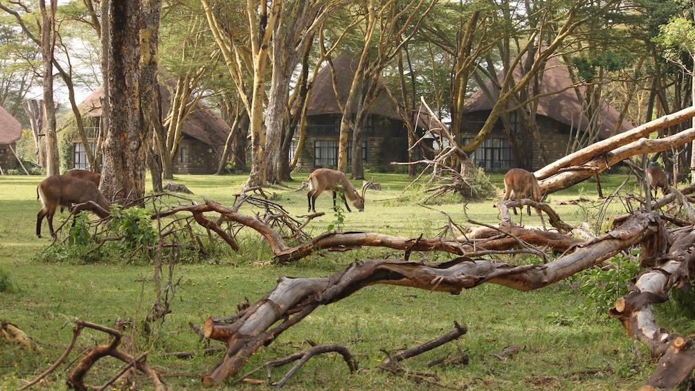 safari animals in africa