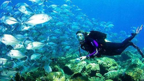 scuba diver surrounded by fish in africa