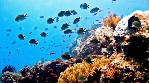 reef in africa