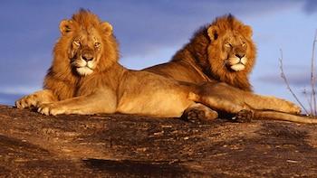 6-Day Karibu Kenya Safari