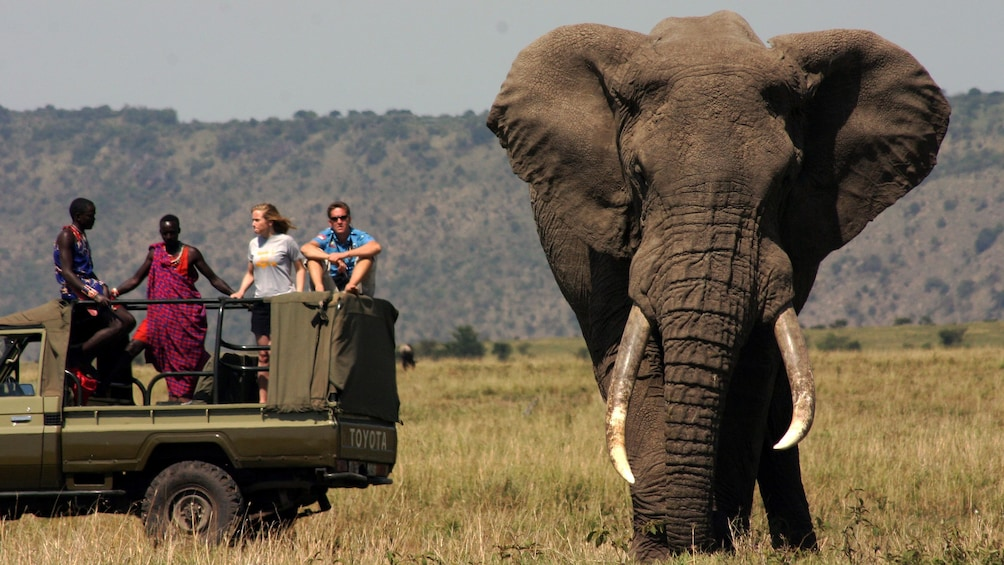 elephant near tour vehicle in africa