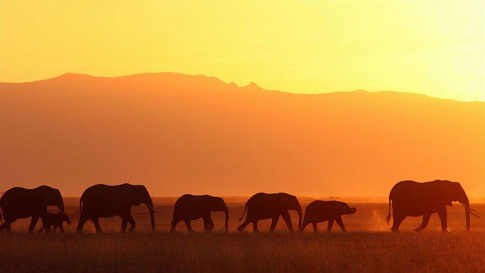 3-Day Amboseli National Park Safari