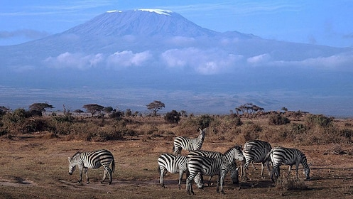 zebras and mountain view in africa