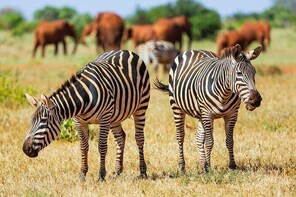 2-Day Ultimate game viewing at Tsavo East National Park