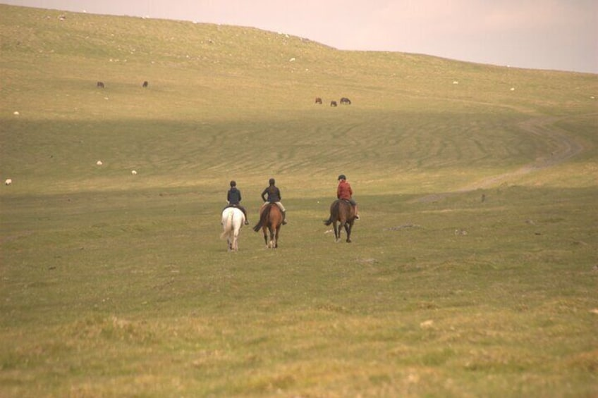 Freedom is riding into the hills on a super fit horse