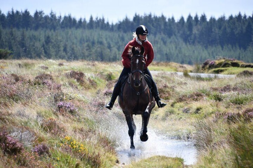 Our Liberty Trails red coats are hard earnt and only given to the most trusted guides