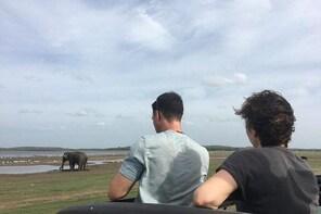 Private Jeep Safari at Minneriya National Park
