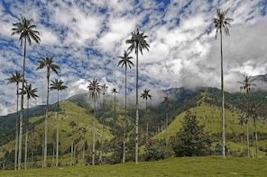 Wax Palms, Salento and Coffee Private Full Day Tour