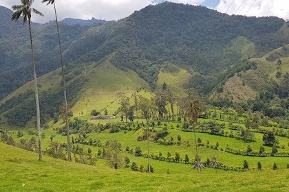 Beautiful Landscape - Cocora Valley