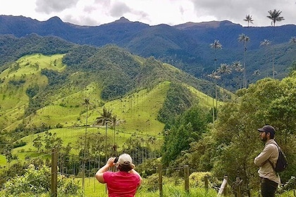 Cocora Valley - Wax Palm Forest