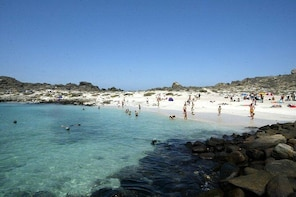 La Serena: Full day to Isla Damas & Humbolt Pinguino National Reserve