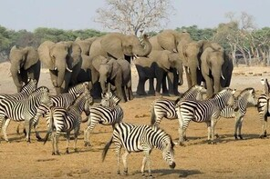 5 Day Mana Pools - Kariba Safari