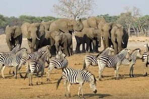 5 Day Mana Pools - Kariba Safari