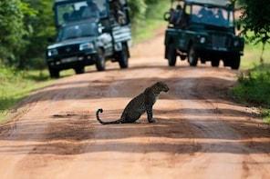 Yala Safari Private Tour