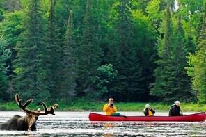 3 Day Algonquin Park Canoe Trip