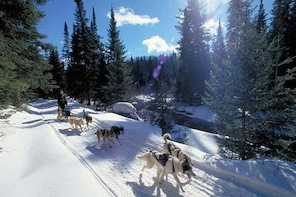 Algonquin Dogsled, Ski and Snowshoe Adventure