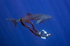 Koh Chang Freedive Trip ( Start at Koh Chang)