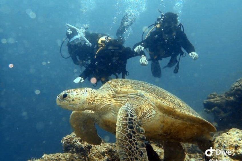 Spot the turtles