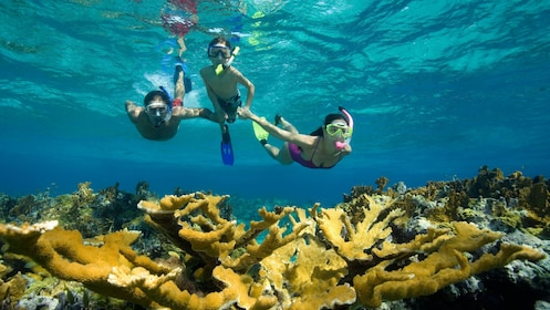 snorkelers swimming over a coral reef near Nevis