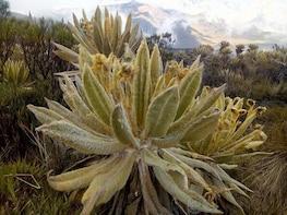 Santa Isabel mountain for begginers