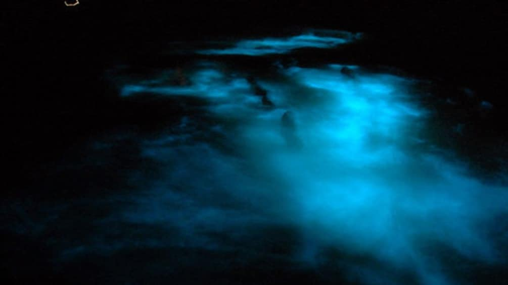 Show item 5 of 7. glowing water from phosphorous which illuminates bright blue when disturbed in jamaica