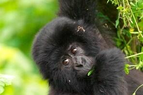 2 Day Gorilla Trekking