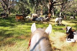 Safari Horse Riding Tour