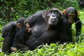 Chimpanzee Tracking & Tropical Waterfall or Canope Walk in Nyungwe Forest