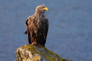 Wildlife Tours and Photographic Tuition on Isle of Skye and Scotland