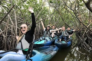 Thousand Island Mangrove Tunnel, Manatee & Dolphin Kayak Tour!