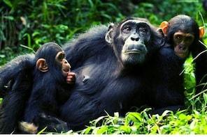 5 Days Uganda Gorillas & Game Drive Safari