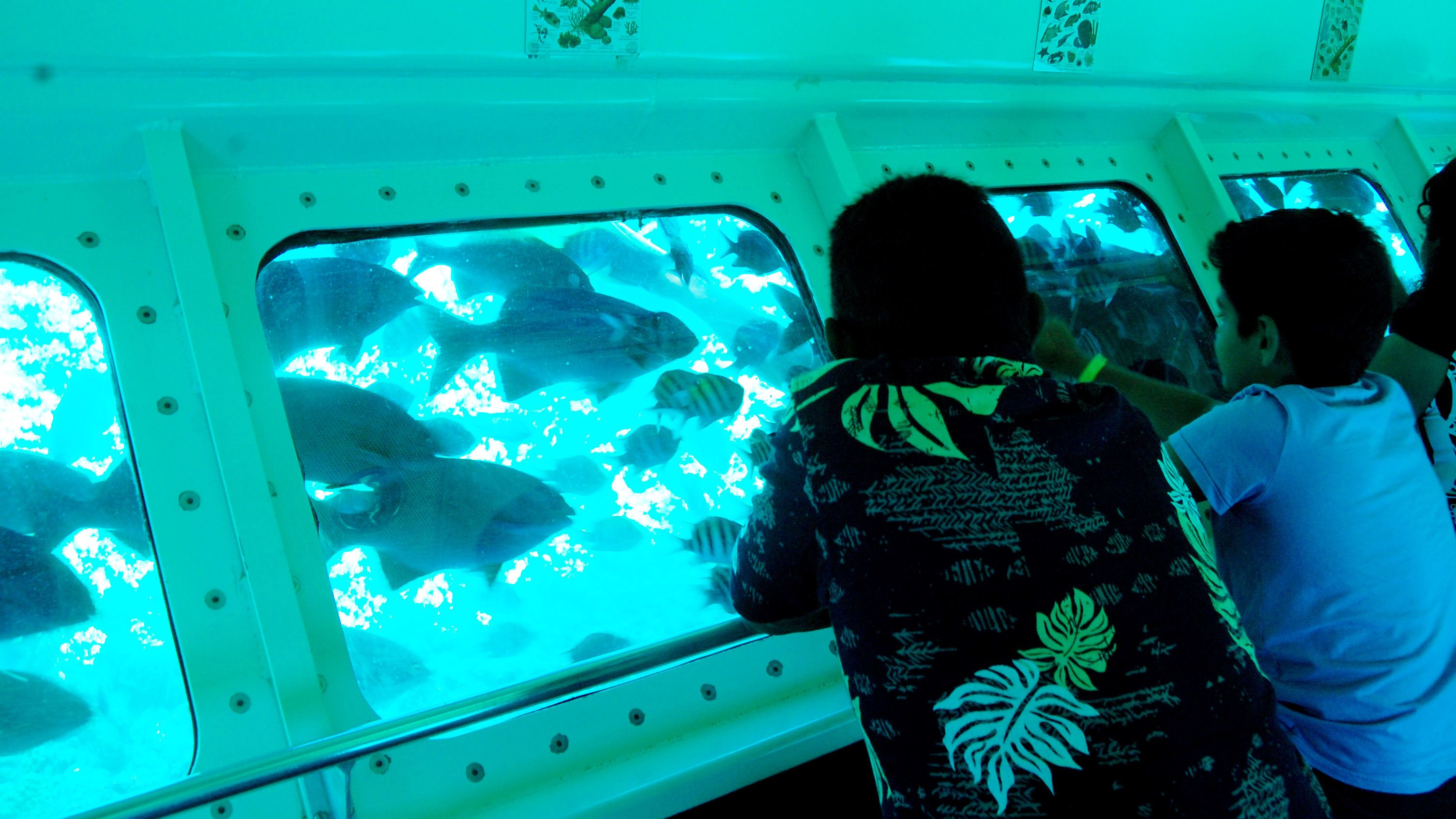 Looking at fishes from the underwater section of the observatory in the Grand Cayman