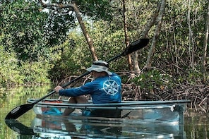 Clear Kayak Tours in Fort Pierce