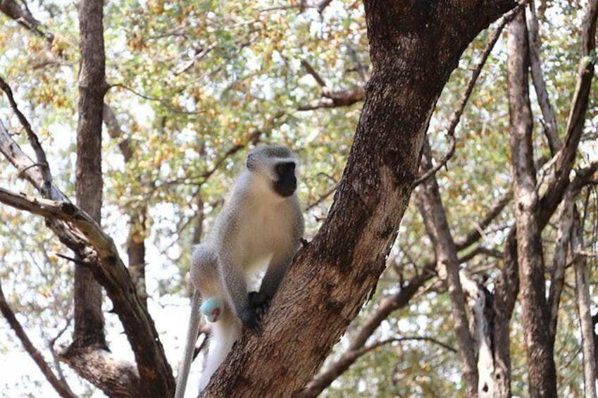Show item 5 of 5. Gaborone Game Reserve