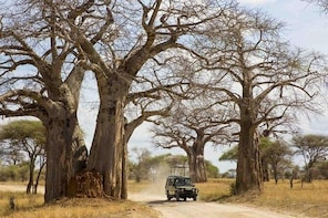 3 Days Ruaha National Park