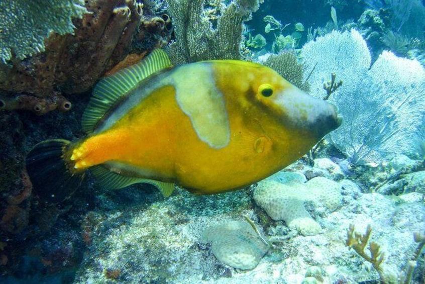 Show item 3 of 6. Half Day Snorkel Trip in the Florida Keys