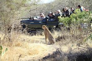 Big 5 Safari Experience with Jessica Sussens