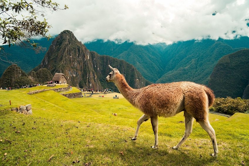 Carregar foto 4 de 10. Machu Picchu Tour via Voyager Train
