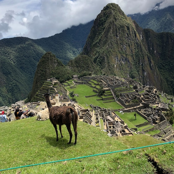 Carregar foto 10 de 10. Machu Picchu Day Tour on Vistadome train with Lunch Included