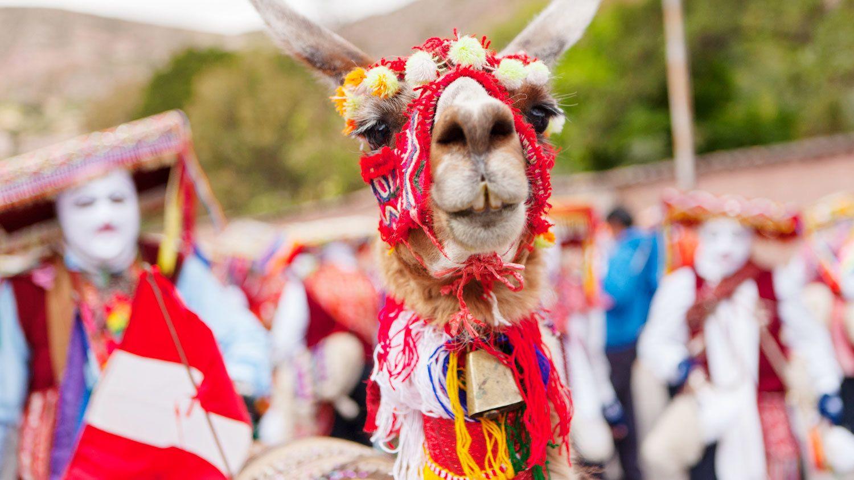 A llama wears a colorful headpiece in Cusco Peru