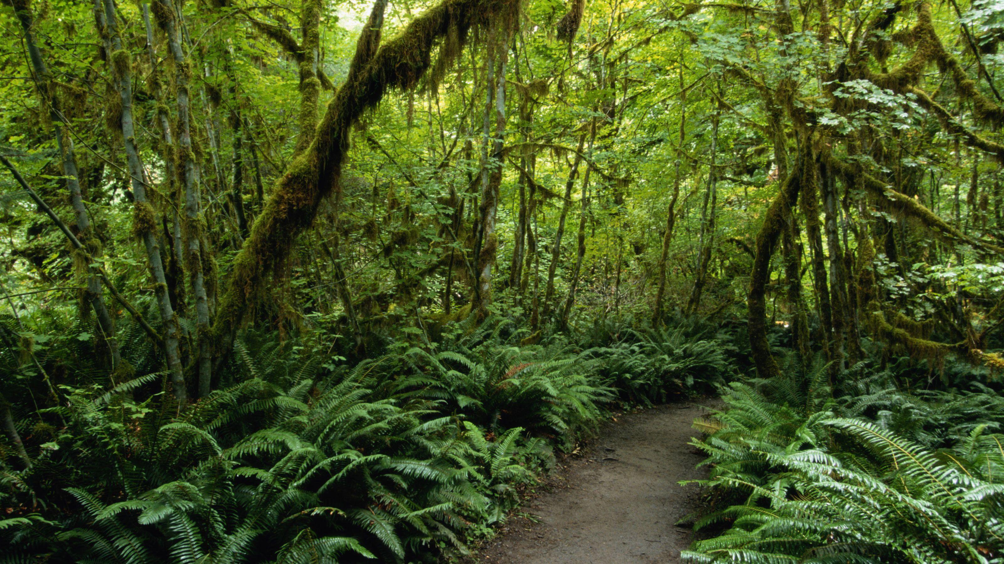 Path through the lush Tijuca forest in Rio de Janeiro