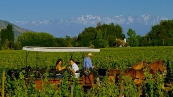 Passeio pela região vinícola do Vale de Colchagua