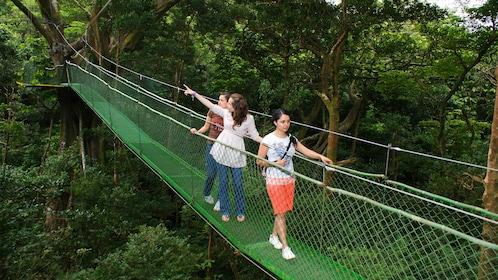 Walking across a narrow suspension bridge in Guanacaste