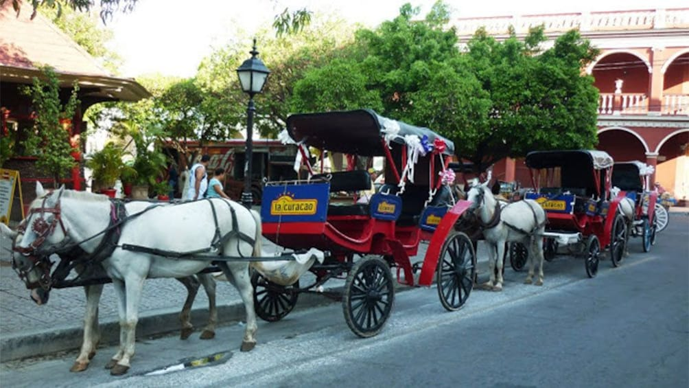 Show item 6 of 6. Horse drawn carriages in Guanacaste