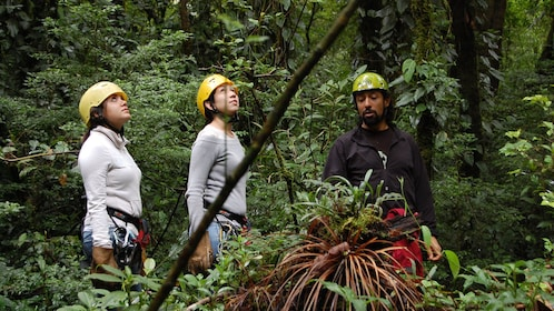 Women with guide looking up in the forest in Costa Rica