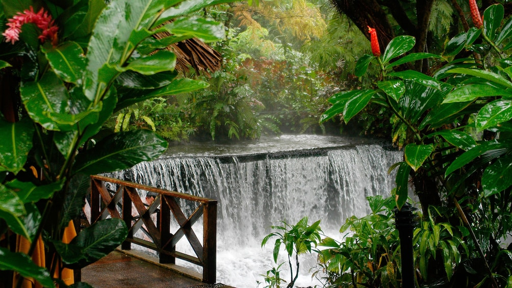 Show item 2 of 7. Colorful flora surrounds the Tabacon Hot Springs in Costa Rica