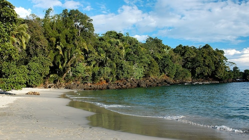 The edge of Manuel Antonio National Park along the water's edge in Costa Rica