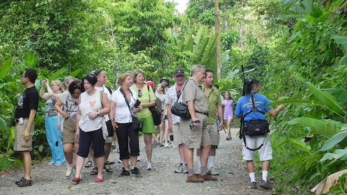 Manuel Antonio National Park tour group walking on a path in Costa Rica