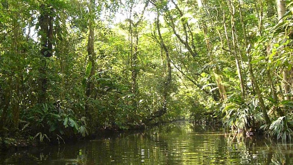 Show item 3 of 10. Sun streaming through the trees that line a narrow waterway through Tortuguero National Park in Costa Rica