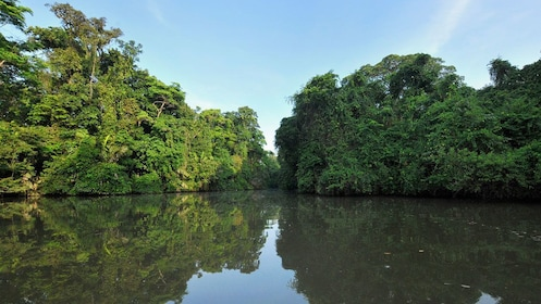 Waterway through the mangrove forest in Tortuguero National Park in Costa Rica